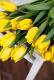 Beautiful bright yellow tulips in Still Life lying on antique white Chair Stock Image