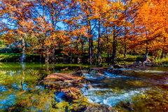 Beautiful Brilliant Fall Foliage on the Guadalupe River, Texas. Brilliant Fiery Orange Color of Fall Cypress Trees on the Guadalupe River Royalty Free Stock Photo