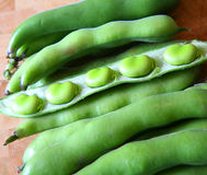 Beautiful broad beans. Fresh Broad Beans in their pods ready to eat stock photography