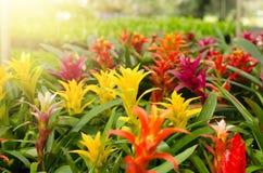 Beautiful bromeliad Stock Photos