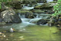 Beautiful brook in the forest royalty free stock photo
