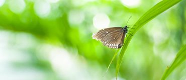 Beautiful brown butterfly sitting on plant on blurred background stock photography