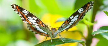 Beautiful brown butterfly sitting on plant on blurred background stock image