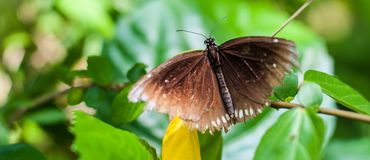 Beautiful brown butterfly sitting on plant on blurred background stock photo