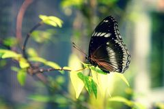 Beautiful brown butterfly sitting on a plant on blurred background. Copy space. Close-up. The horizontal frame Stock Photo
