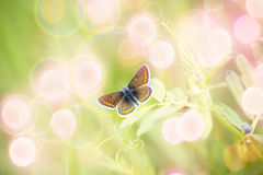 Beautiful brown butterfly on spring flower Stock Photos