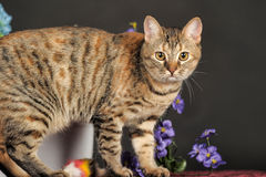Beautiful brown cat among the flowers Stock Image