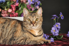 Beautiful brown cat among the flowers Stock Photos