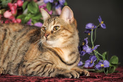 Beautiful brown cat among the flowers Stock Photo