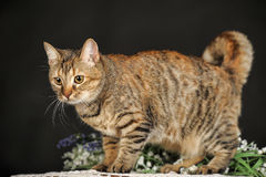 Beautiful brown cat among the flowers Royalty Free Stock Photo