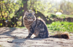 Beautiful brown cat Royalty Free Stock Images