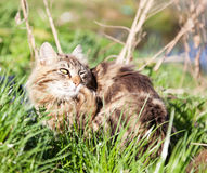 Beautiful brown cat Royalty Free Stock Photography