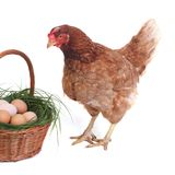 Beautiful brown chicken near the basket with eggs Stock Photo