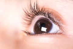 Brown child`s eyes. Beautiful brown Child`s eyes , looking top stock images