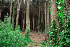 Beautiful brown colored woodland. Sintra, Portugal royalty free stock photos