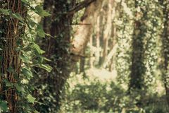 Beautiful brown colored woodland. Sintra, Portugal royalty free stock photography