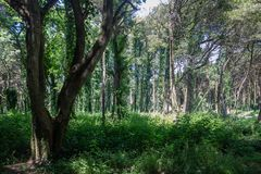 Beautiful brown colored woodland. Sintra, Portugal royalty free stock image