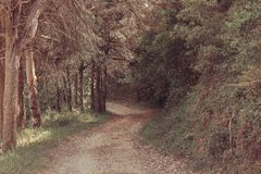 Beautiful brown colored woodland. Sintra, Portugal royalty free stock photo