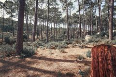 Beautiful brown colored woodland. In Sintra, Portugal stock photo