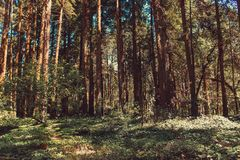 Beautiful brown colored woodland. Sintra, Portugal stock images