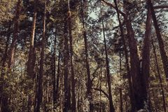 Beautiful brown colored woodland. Sintra, Portugal stock image