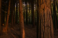 Beautiful brown colored woodland. Sintra, Portugal stock photography