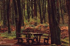 Beautiful brown colored woodland. Sintra, Portugal stock photo