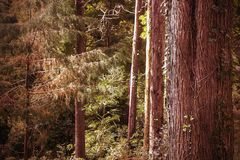 Beautiful brown colored woodland. Sintra, Portugal stock photos