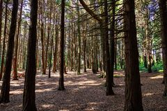 Beautiful brown colored woodland. Sintra, Portugal royalty free stock images