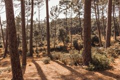 Beautiful brown colored woodland. In Sintra, Portugal stock photos