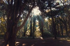 Beautiful brown colored woodland. In Sintra, Portugal stock images