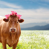 Beautiful brown cow with flowers Royalty Free Stock Image