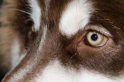 Beautiful brown dog eyes shining light. Amazing Royalty Free Stock Photo