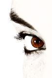 Beautiful brown eye Royalty Free Stock Images