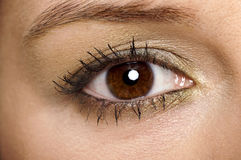 Beautiful brown eye Stock Photography