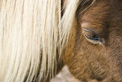 A beautiful brown horse Royalty Free Stock Photography
