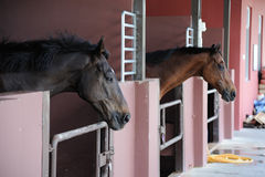 Beautiful brown horse Royalty Free Stock Photos