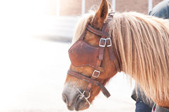 Beautiful brown horse,domesticated animal used by humans as transportation Royalty Free Stock Photo