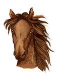 Beautiful brown horse portrait Royalty Free Stock Photography