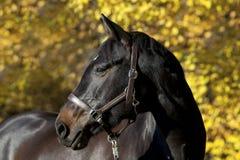 Beautiful brown horse portrait
