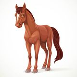 Beautiful brown horse with a star on his forehead Stock Photography