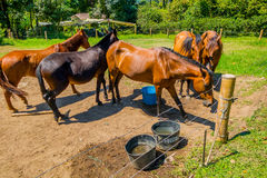 Beautiful brown horses in a farm Stock Photo