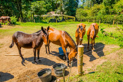 Beautiful brown horses in a farm Stock Photography