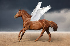 Beautiful brown pegasus horse galloping wild on sky Stock Photo