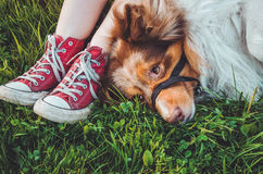 Beautiful brown redhead dog lying in the grass after long play, having fun outdoors. Happy hipster girl with her best Royalty Free Stock Images