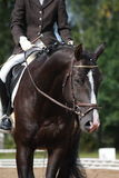 Beautiful brown sport horse portrait Royalty Free Stock Photography