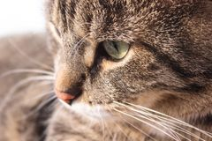 Beautiful brown tabby cat with big green eyes on the background of summer greens. Amazing background stock photo