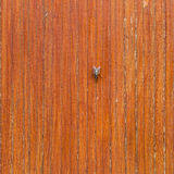 Beautiful brown wooden texture or background with fly Royalty Free Stock Photo