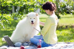 A girl is feeding her dog in a park on a picnic. stock image