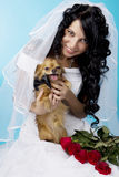 Beautiful brunette bride with a dog Royalty Free Stock Images